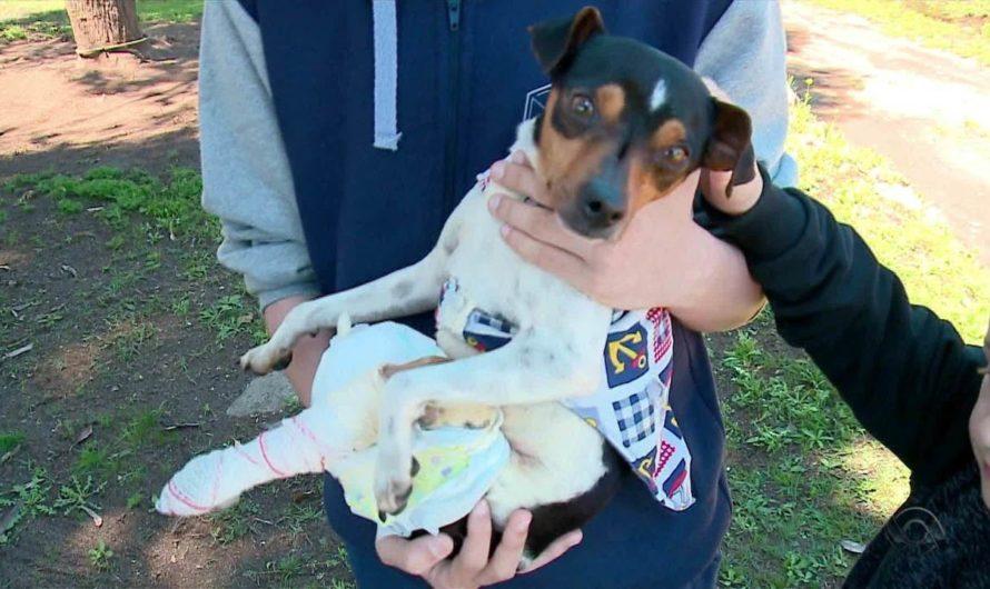 Irmãos juntam dinheiro para ajudar a pagar cirurgia de um cachorro, em Canguçu